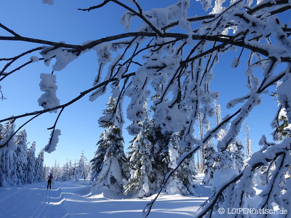 Auf die weiße Spuren in Böhmerwald