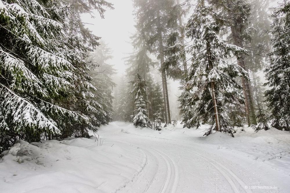 Langlaufen im Steinwald
